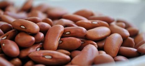 Des haricots résistant au réchauffement climatique sont testés en Colombie   Pierre-André Fontaine   Scoop.it