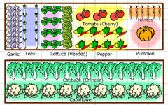 The adaptable vegetable garden planner | Gardening | Scoop.it