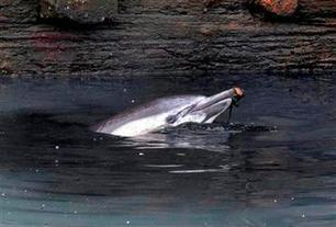 Wayward dolphin dies in polluted New York canal | All about water, the oceans, environmental issues | Scoop.it