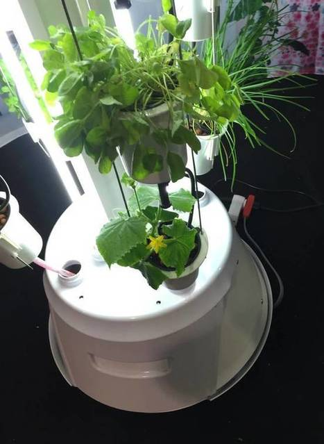 Nutritower is a vertical farm for your tiny condo | Vertical Farm - Food Factory | Scoop.it