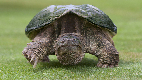 19 weird and wonderful turtle and tortoise species | Biodiversity protection | Scoop.it