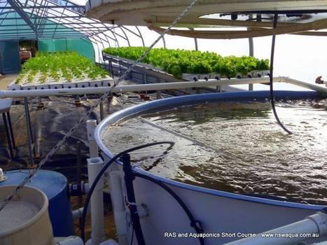 Recirculating Aquaculture and Aquaponics Short Course   Integrated Aquaculture   Scoop.it