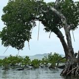 Building Resilience and Cultivating Your Mangrove Swamp | Mangrove Swamp | Scoop.it