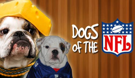 44 Coolest Dogs Of The NFL [PHOTOS] | BustedCoverage – Sports ... | Sports Photography | Scoop.it