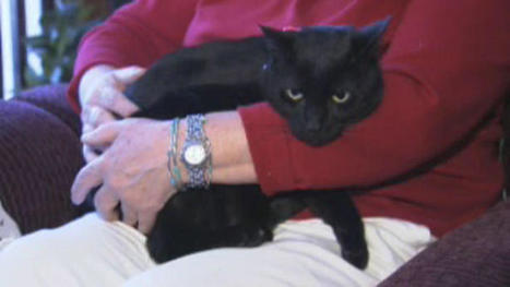 Cat Returns Home 6 Months After Going Missing During Sandy - NBC 10 Philadelphia | Cats Cat History | Scoop.it