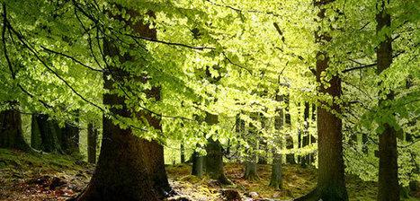 Los árboles viejos resisten al cambio climático - Actualidad Medio Ambiente   Actualidad forestal cerca de ti   Scoop.it