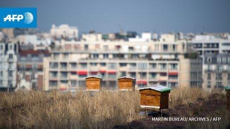 La toiture végétalisée, source de soucis juridiques | Histoire culturelle - Culture, espaces, environnement | Scoop.it