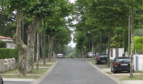 Les rues bordées d'arbres sont bonnes pour la santé | Gestion des services aux usagers | Scoop.it