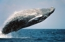 Korea Abandons Whaling Plans | All about water, the oceans, environmental issues | Scoop.it