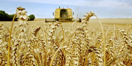 Agriculteurs français : production en hausse, revenus en baisse | Questions de développement ... | Scoop.it