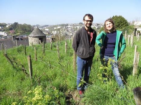 Associatif. Un bout de quartier se retrouve autour des vignes - Ouest-France | biodiversité en milieu urbain | Scoop.it