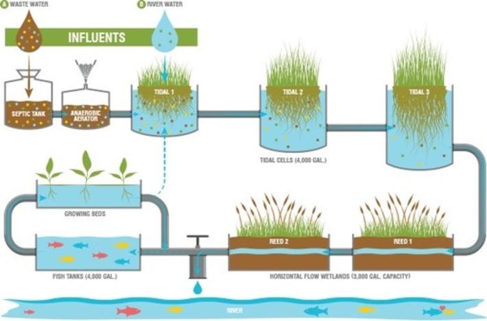 Environmental Remediation Using Hydroponics | Almere Groene Stad | Scoop.it