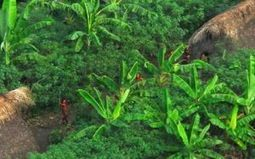 Amazon tribes' forests are a vital carbon sink | Rainforest EXPLORER:  News & Notes | Scoop.it