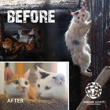 Cat Who Was Next To Be Slaughtered Learns Miracles Do Exist | Nature Animals humankind | Scoop.it