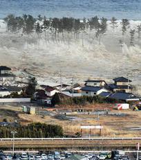 Japon: Un chien secouru en mer 21 jours après le tsunami ! | Mais n'importe quoi ! | Scoop.it