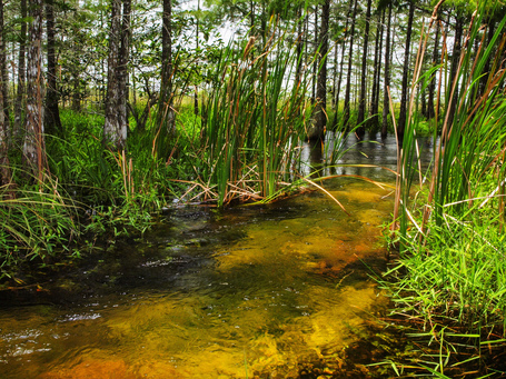 World Wide Wetlands: Making the Case for Landscape Management | Landscapes for People, Food, and Nature Blog | Nature's Bounty | Scoop.it