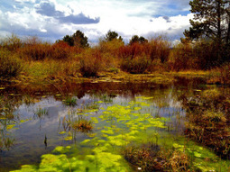 Small wetlands critical to overall ecosystem functions | Natural History, Environment, & Science | Scoop.it