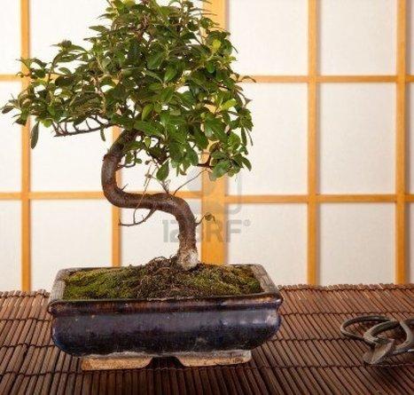 B.fab!: wnętrza w stylu japońskim / japanese interior design | Damson-Interiors | Scoop.it