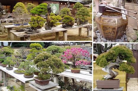 Bonsai Blog: Seiko-en, Omiya | Bonsai | Scoop.it