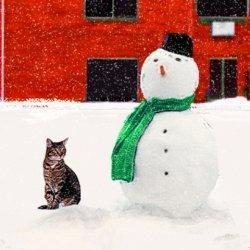 Christmas Cats: Gifts For Cat Lovers | Christmas Cat Ornaments and Cards | Scoop.it