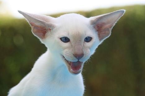 Best Funny Cats Compilation 2014, Top Funniest Cat Videos | Animal Welfare | Scoop.it