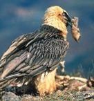 Présentation au CNTE de l'avant projet de loi relative à la biodiversité | Institutionnels | Scoop.it