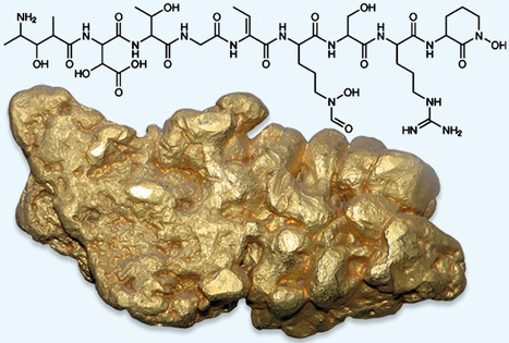 Gold biomineralization by a metallophore from a gold-associated microbe   altın   Scoop.it