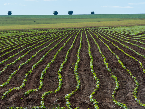Peak Farmland? Some Researchers Say It's Here : NPR | A Better Food System | Scoop.it