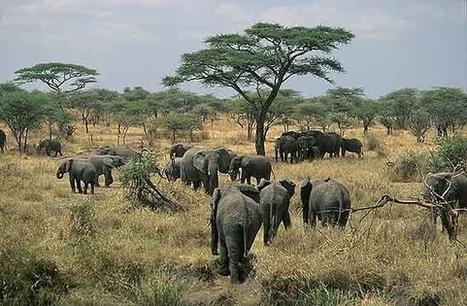 Mara Orders Herders Out of Serengeti Park in Tanzania  glObserver Global Economics   May geo 152   Scoop.it