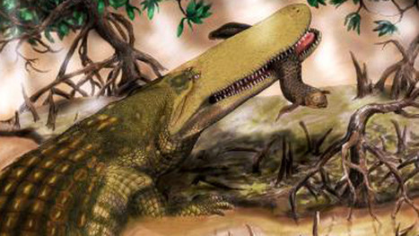 New species of ancient crocodile discovered - Technology & Science - CBC News | All about water, the oceans, environmental issues | Scoop.it