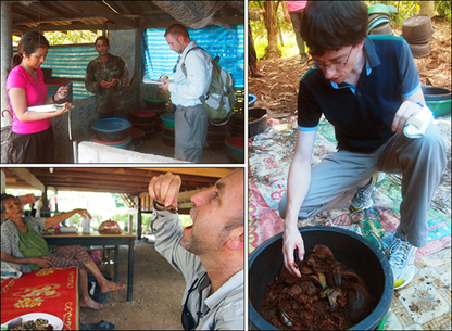 CISR Blog: Entomophagy: Farming Palm Weevils for Food | eating insects = win | Scoop.it