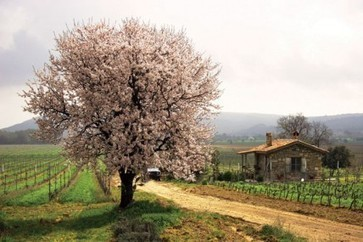 Jefford on Monday: More Than Alcohol | Vitabella Wine Daily Gossip | Scoop.it