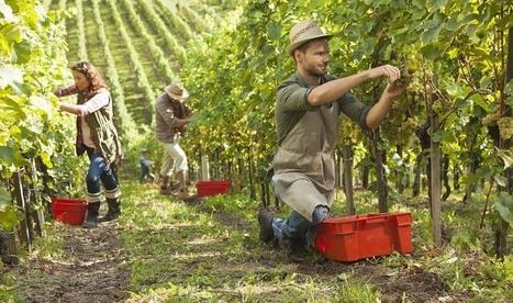 Travailleurs saisonniers : où se loger ? | Vos Clés de la Cave | Scoop.it