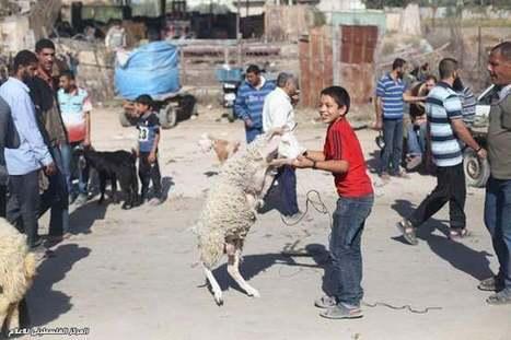 Eid Mubarak | عيد مبارك | Eid al-Adha 2013 in Palestine - In Photos | Occupied Palestine - In Photos | Scoop.it