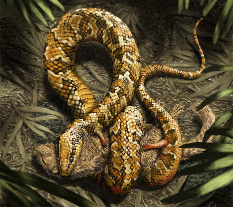 A Fossil Snake With Four Legs | Biodiversity protection | Scoop.it