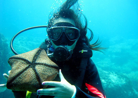 Scuba diving in Vietnam - Diving tours in Nhatrang, Halong, Phuquoc, Hoian | Travel Tips | Scoop.it