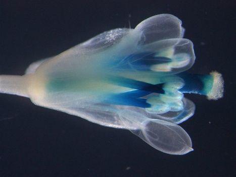 The secret inner world of plants › Photos (ABC Science) | De Natura Rerum | Scoop.it