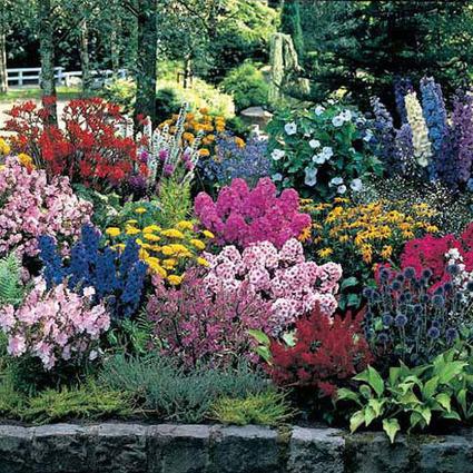 Sun Perennial Flowers - Sun Loving Perennial Flowers for Your Home Gardens | Spring Hill Nursery | Springhill Nursery Gardening | Scoop.it