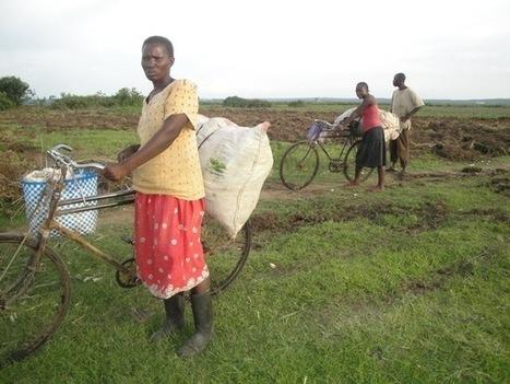 Paysans kenyans:  récolte de misère | Questions de développement ... | Scoop.it