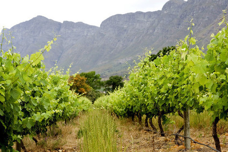 South Africa Wine Exports Setting Records on China Demand ... | Africa export & import trend | Scoop.it