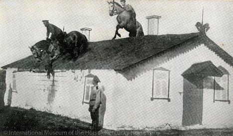 Horsemanship for Beginners!   Equine Photography   Scoop.it