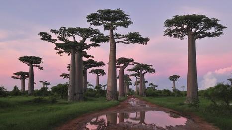 Madagascar-Tribune.com | Madagascar : Il faut mettre fin aux massacres et enquêter sur les forces de sécurité | Une géographie de Madagascar | Scoop.it