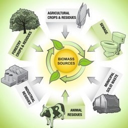 Biomass Energy Scenario in ASEAN Countries | Trees of Margalla Hills | Scoop.it