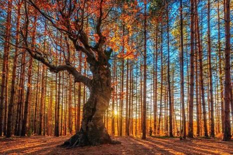 Bulgaria's Radiant Rhodope Mountains | Interesting Photos | Scoop.it