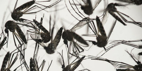 Le virus Zika jugé «plus inquiétant» que prévu | YetiYetu | Scoop.it