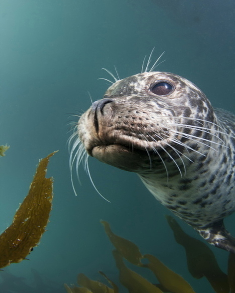 Scientists focus on harbor seals as 'samplers of the environment' - San Jose Mercury News | Insect protein is future food source for Animal and Human beings?! | Scoop.it
