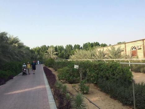 Watch best of Dubai Wildlife in Dubai Zoo | Holiday Inn Dubai Al Barsha | Scoop.it