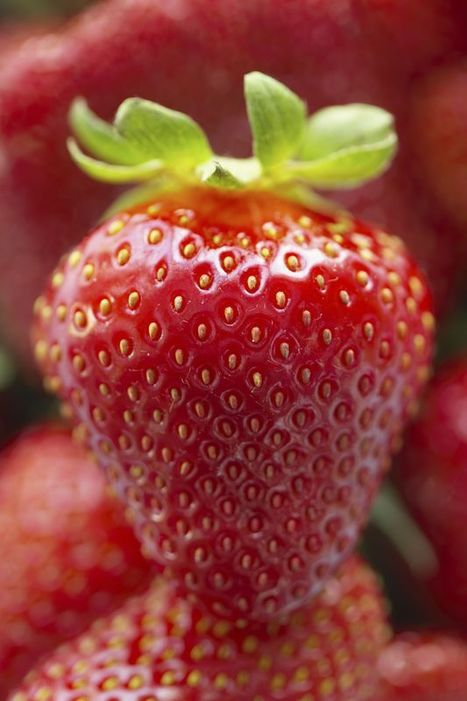 Strawberries: An Easy to Grow Treat | School Gardening Resources | Scoop.it