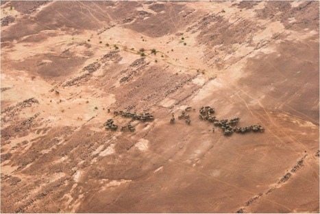 Mali: Elephants make record-breaking trek to survive - The WILD ...   West Africa: Tourism   Scoop.it
