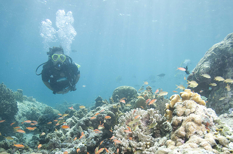 Scuba Diving: Underwater Meditation | All about water, the oceans, environmental issues | Scoop.it